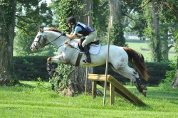 Etalon Appaloosa au cross