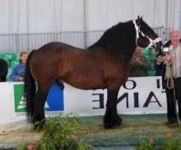 Etalon cheval Burguete au modèle