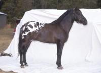 Etalon Colorado Ranger au modèle