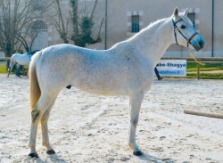 cheval arabe documentaire