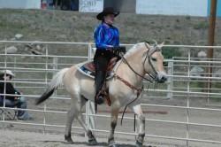 Fjord en équitation western