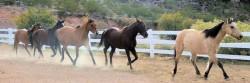 Groupe de chevaux Blazer