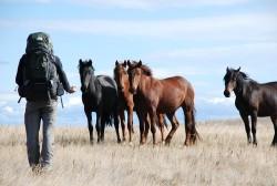 Groupe de chevaux Bouriate