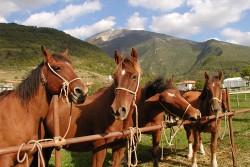 Groupe de chevaux de Catria