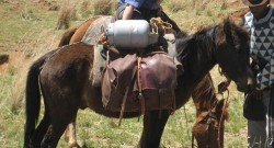 Le Basuto comme cheval de bât