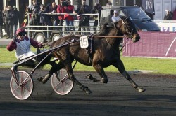 Le célèbre Trotteur Français Ready Cash en course de trot attelé