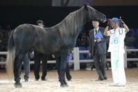 Le cheval Barbe au modèle