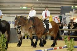 Le cheval de trait Auxois monté
