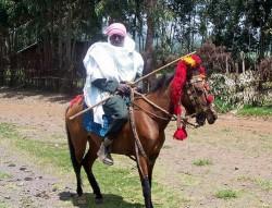 Le poney Abyssinien en monte traditionnelle
