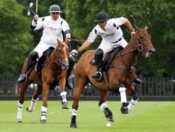 Le Selle Argentin en compétition de polo