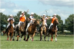 Les chevaux Henson de l'équipe de Polocross