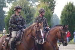 Les Franche Montagne de l'Armée Suisse