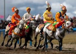 Les poneys du Bhoutan