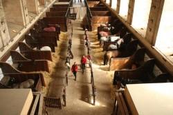 Les stalles des Ecuries de Chantilly
