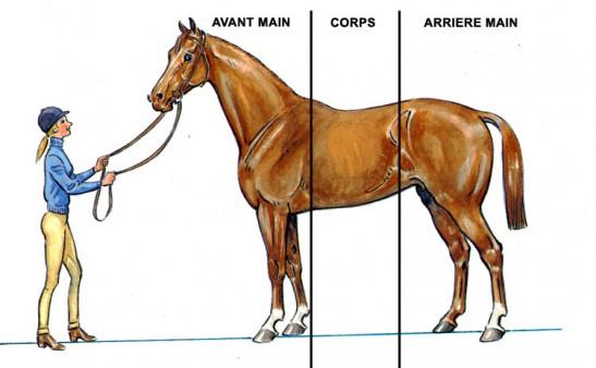 Les trois différentes grandes parties du corps