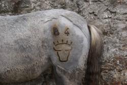 Marquage type du cheval de race Camargue