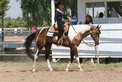 Paint Horse et équitation western
