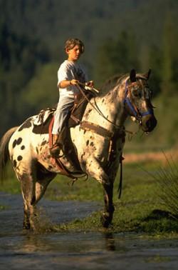 Petit garçon et son poney des Amériques en monte western