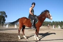 Poney Abyssinien monté en équitation de loisir