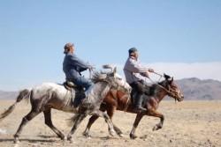 Poney Altaï montés