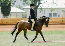 Poney Australien en dressage
