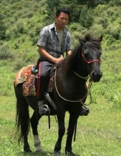 Poney du Bhoutan monté