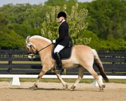Poney Fjord en dressage