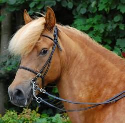 Portrait d'un cheval Aegidienberger