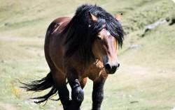 Portrait d'un cheval Burguete