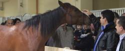 Portrait d'un cheval Canik