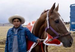 Portrait d'un cheval Chumbivilcas