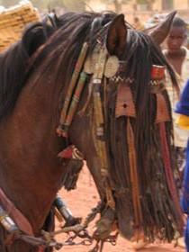 Portrait d'un cheval Djerma