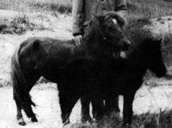 Poulain Baise - Guangxi et sa mère