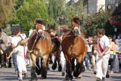 Présentation en main de chevaux Auxois