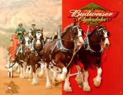 Pub Budweiser Clydesdale