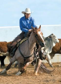 Quarter Horse lors du travail du bétail