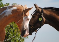 Rencontre de deux chevaux