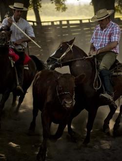 Rodéo avec des chevaux chilien