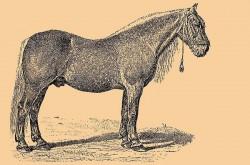 Schéma d'un cheval Bitcuk