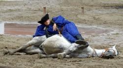 Spectacle Equestre avec un cheval Lipizzan