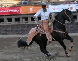 Travail d'un cheval Corralero chilien