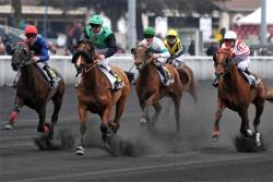 Trotteurs Français en course de trot monté