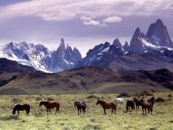Troupeau de chevaux Andin