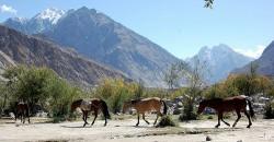 Troupeau de chevaux Baluchi