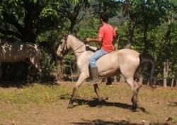 Un poney du Bali monté