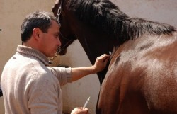 Vaccination d'un cheval