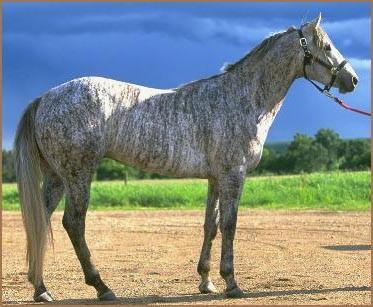 Les plus belle robe de chevaux